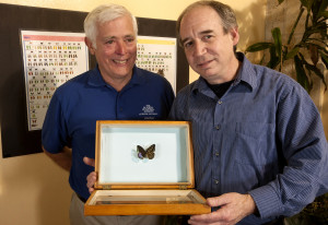 Volunteer Chris Johnson (left),  with entomologist Jason Weintraub and the preserved Lexias pardais. Photo by Doug Wechsler/VIREO
