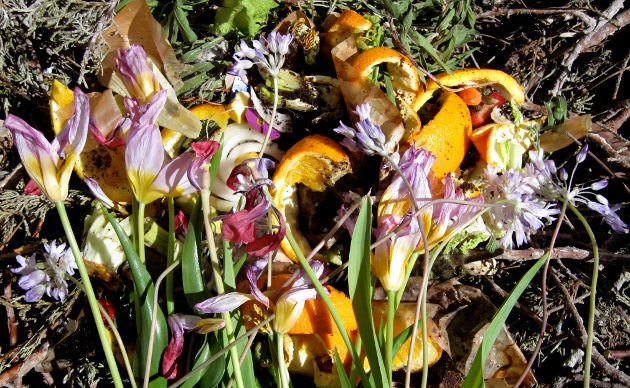 flowers with vegetable peels
