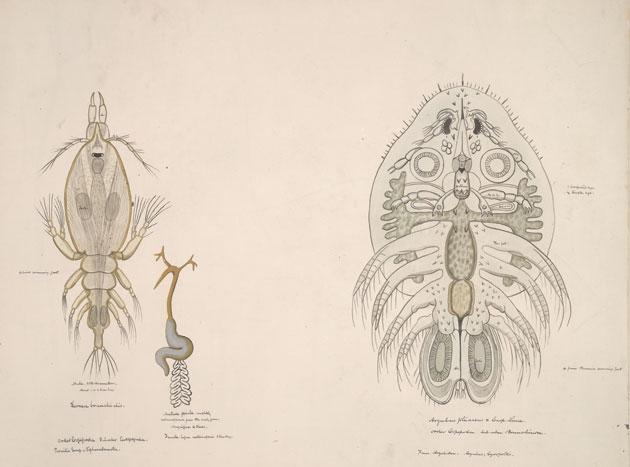 Archival Illustration