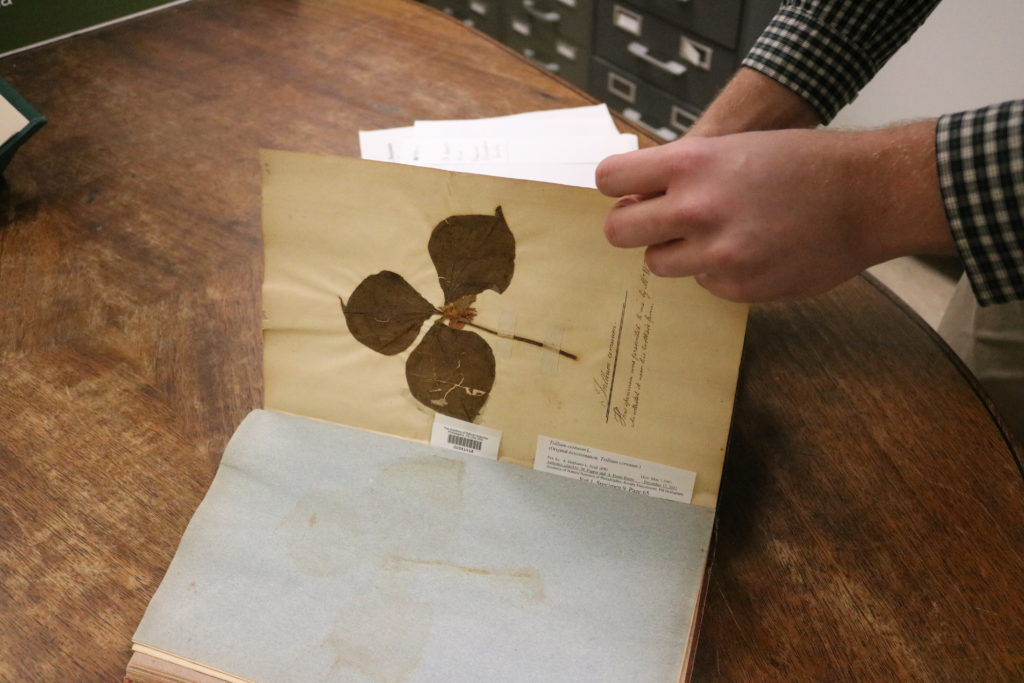 The Botany Collection is an herbarium that contains fungi, lichens, mosses, ferns, and various other types of flowering plants.