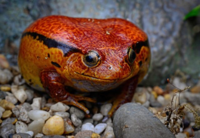 Frogs: A Chorus of Colors is open on spring break at the Academy of Natural Sciences