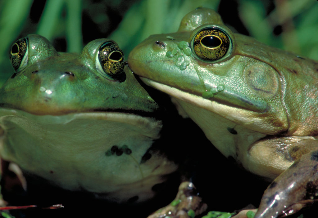 Frogs: A Chorus of Colors opens February 4. The exhibit features re-created habitats, and allows visitors to view their favorite amphibians up close.