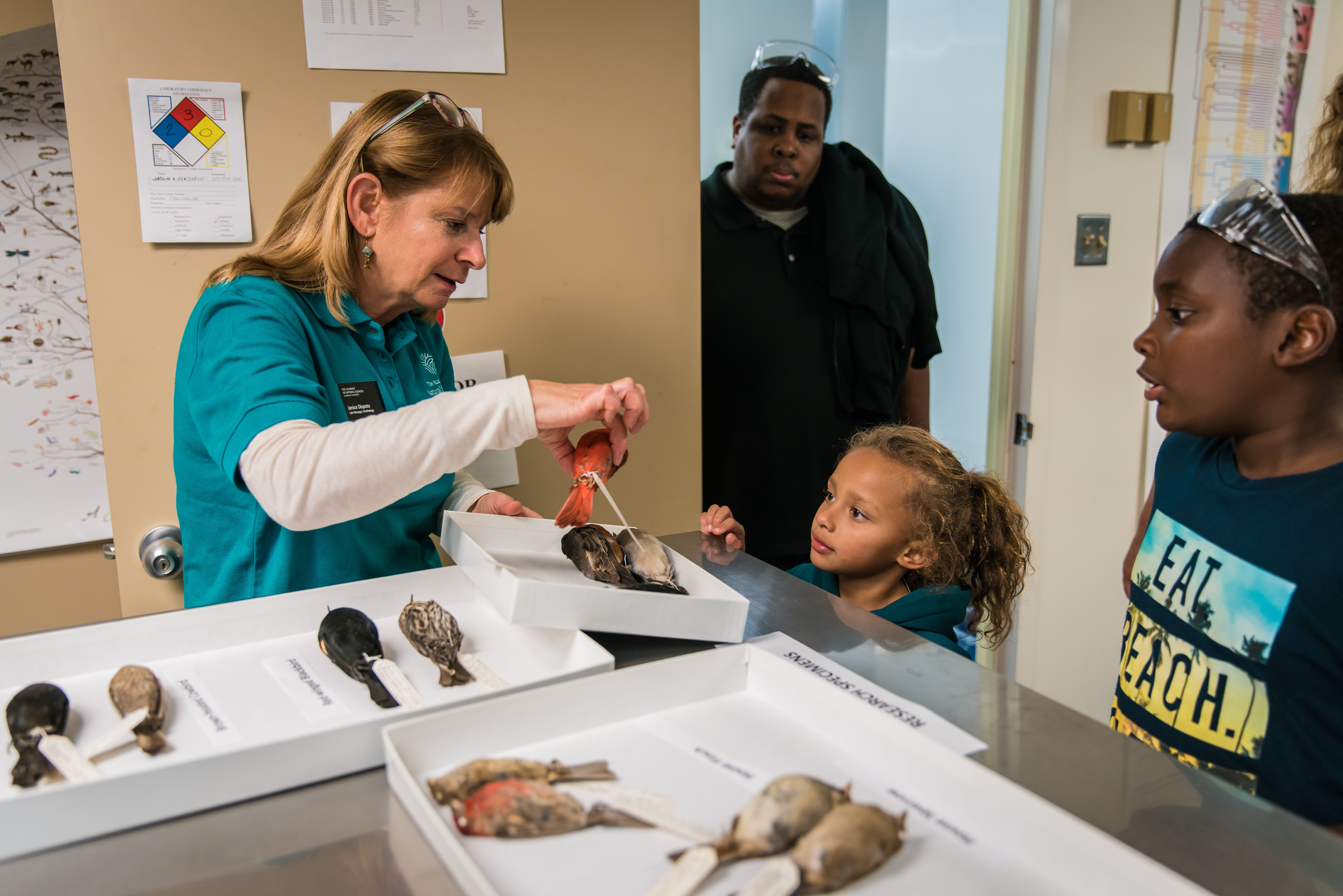 Kids learning how to I.D. bird specimens
