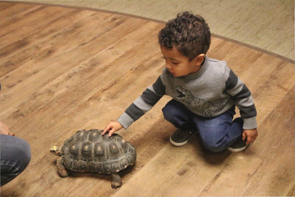 Turtle enrichment