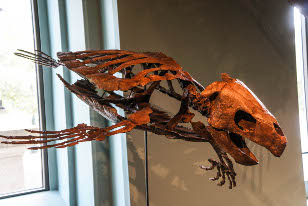 a skeleton of a sea turtle suspended on a wire