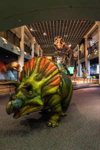 Tracy the Triceratops Photo: Mike Servedio/ANSP