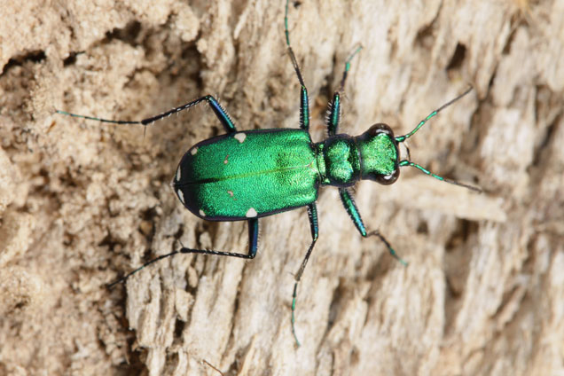 What bugs are in your backyard? Find out at Backyard Adventures, opening June 9 at the Academy of Natural Sciences.