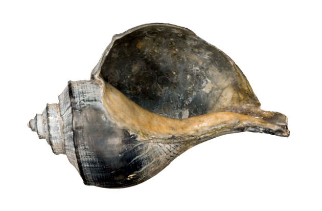 a blackened shell