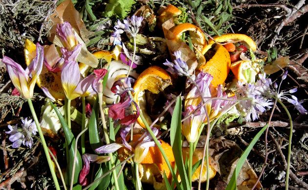 flowers with vegetable peels