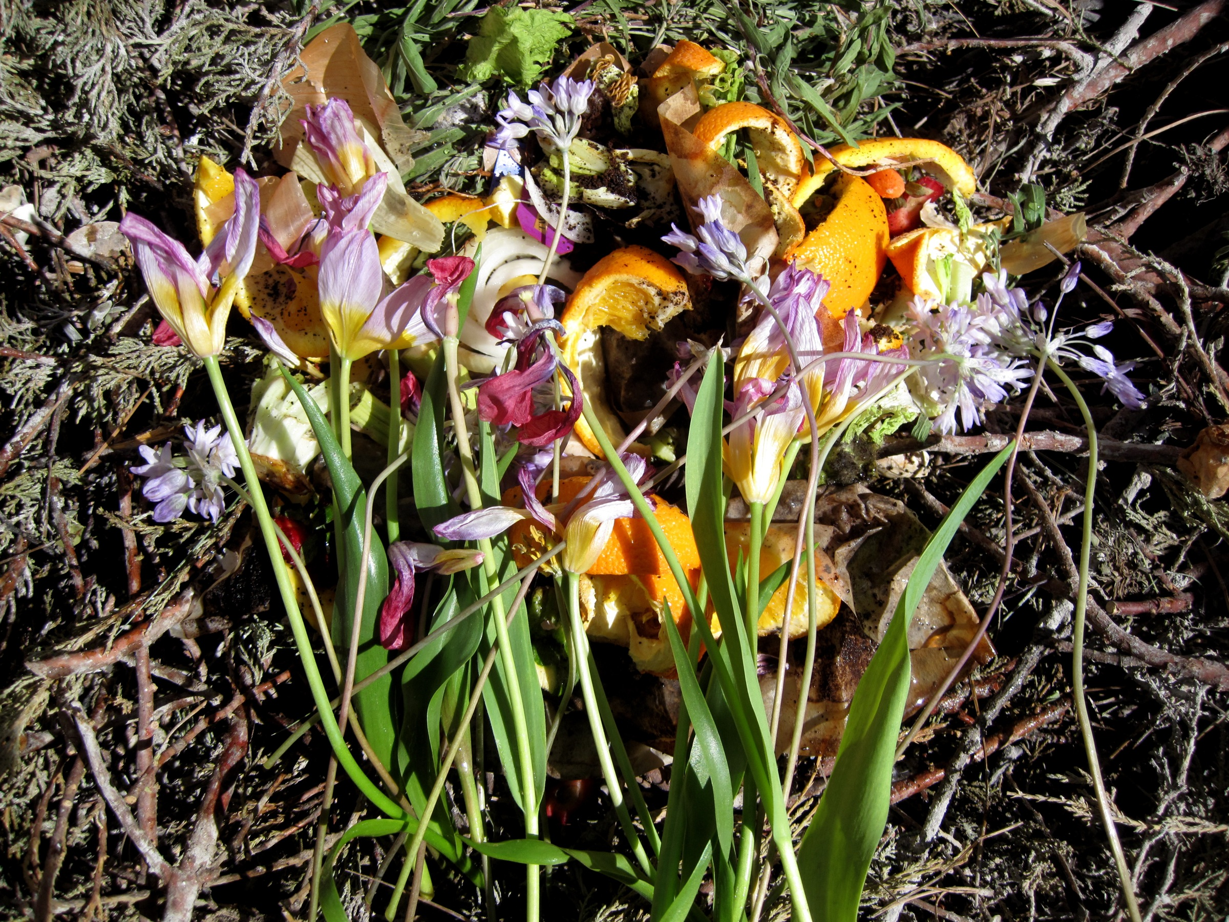 Compost, featuring orange peels and pink flowers