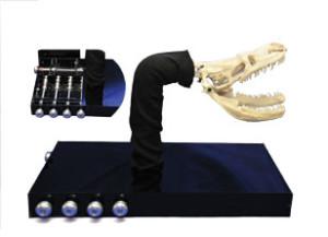 Final Model of Snake Jaw