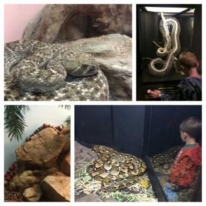 Academy-Reptile-Snakes