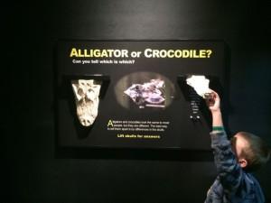 Academy-Reptiles-Croc-VS-Alligator