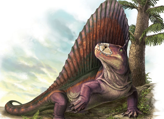 Dimetrodon with jaw section outlined