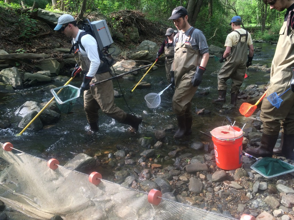 Academy scientists return to Cobbs Creek near Havertown, Pa., every other year to monitor fish populations and species abundance for a long-term survey. Here they are electrofishing to capture and then release fish. Photo by: Sylvan Klein/ANS