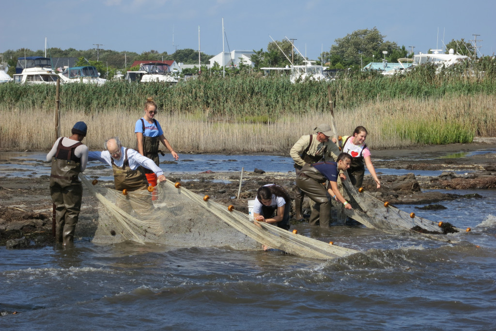 Students assist Academy scientists in field work in a New Jersey bay.