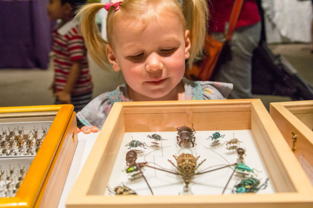 Girl looks at bug specimens up close at Academy of Natural Sciences summer science camp.
