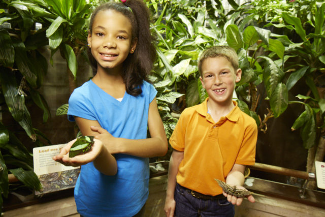 Girl and boy hold live butterflies in tropical exhibit. Register today for Animals Alive week of Academy Explorers Summer Camp.