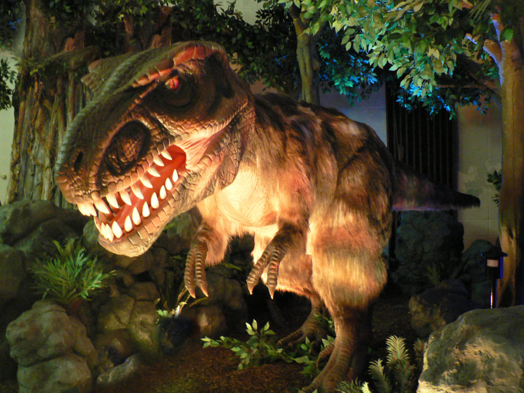 Scientists say T. rex had feathers as a youngster. Who knew?! Photo by Dinosaurs Unearthed.