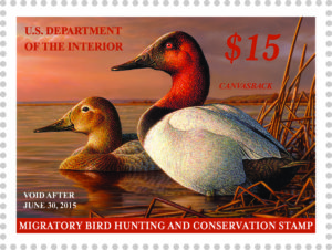 Canvasback Ducks appear on the 2015 stamp.