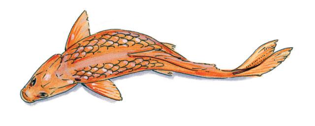 Fish Illustration by Jason Poole