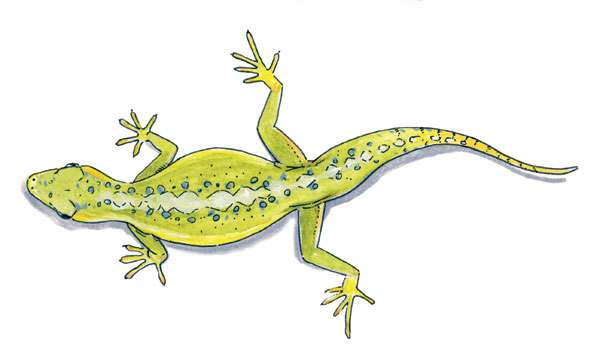 Reptile Illustration by Jason Poole