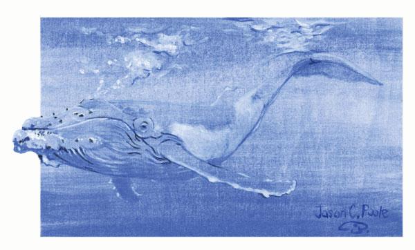 Whale Illustration by Jason Poole