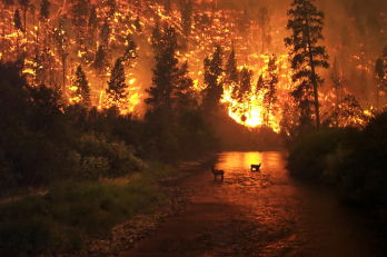 California has particularly been devastated by wildfires.