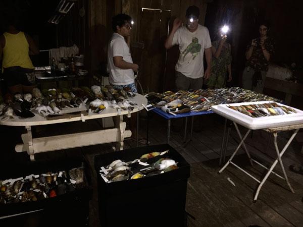 collected bird specimens