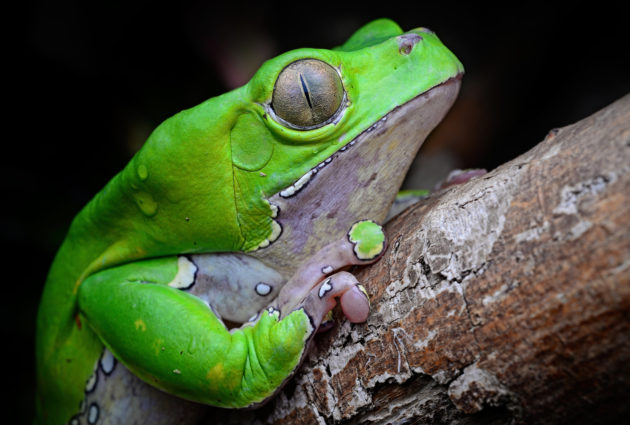 Visit the Academy of Natural Sciences to see a frogs exhibit this spring.