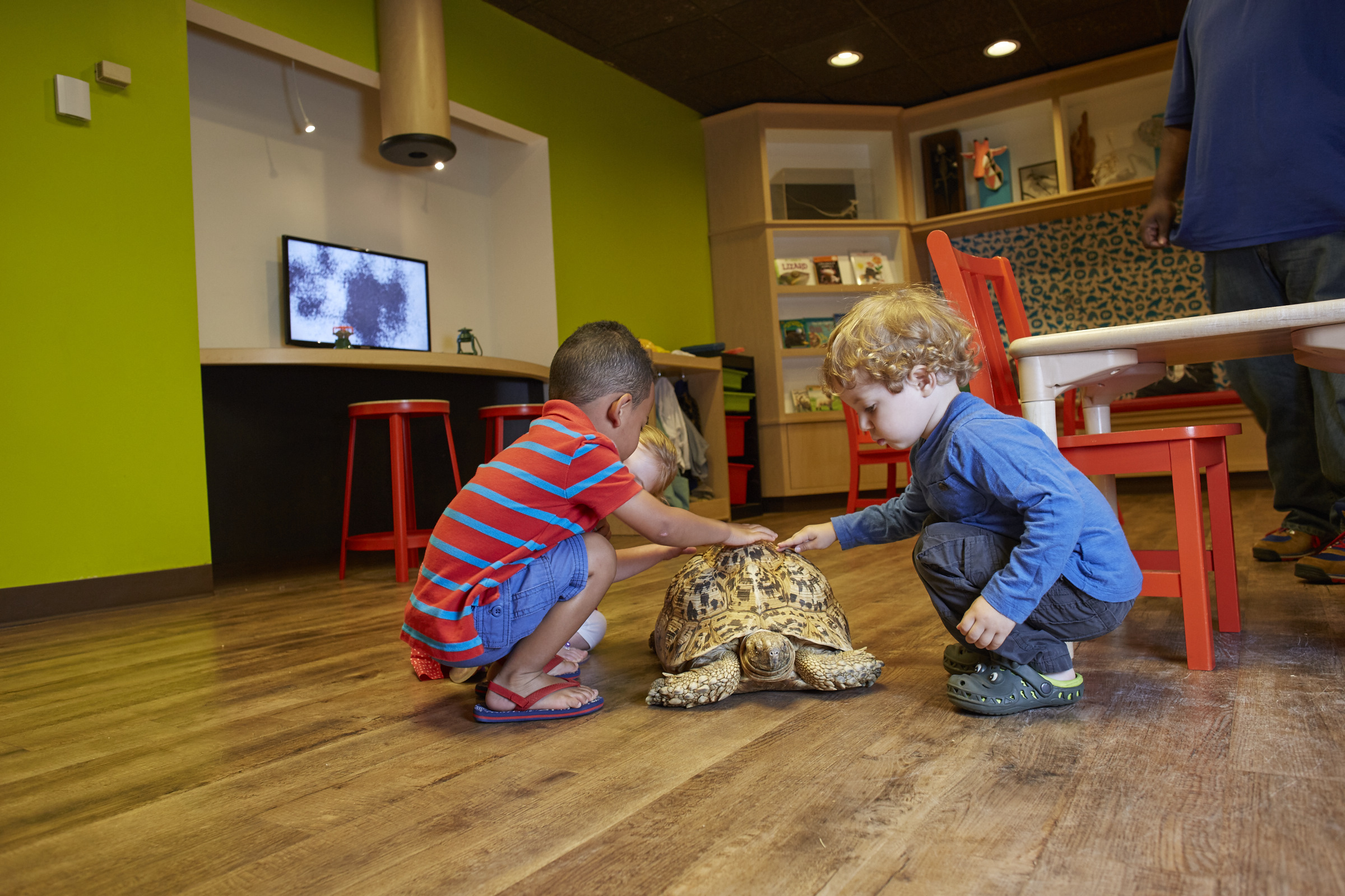 Outside In, the Academy's children's discovery center, has live animals to see every day