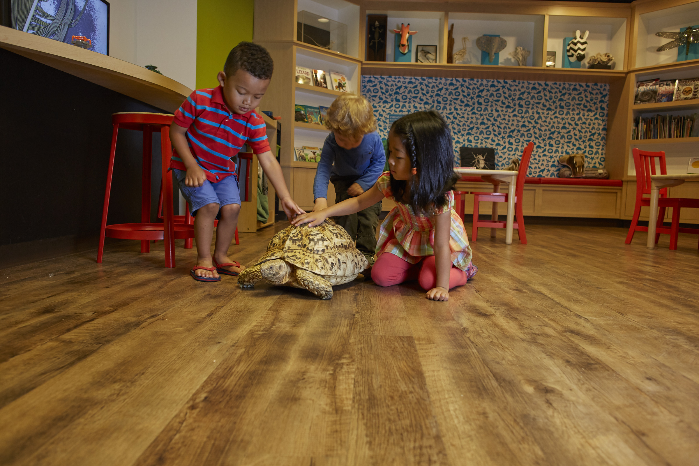 Visit Outside In, the children's discovery center at the Academy of Natural Sciences.