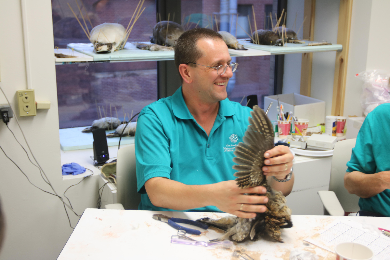 Ornithologist prepares bird specimen