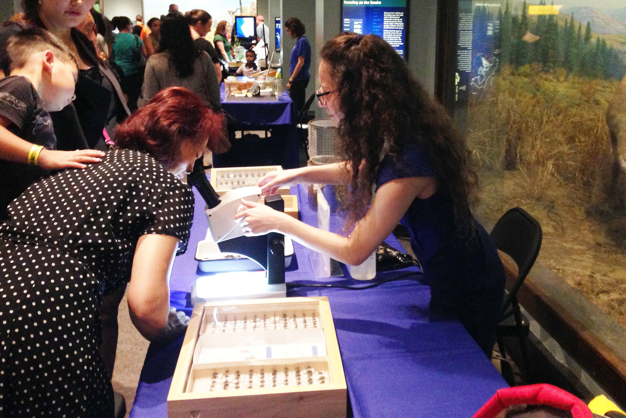 Bug Fest at the Academy of Natural Sciences