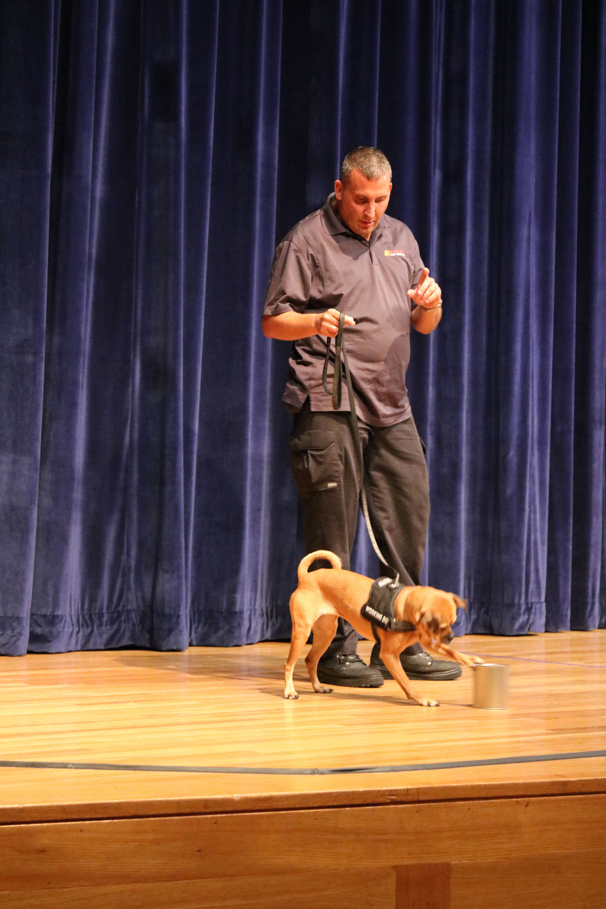 Bed bug sniffing dog demo with Western Pest. Man with small brown dog