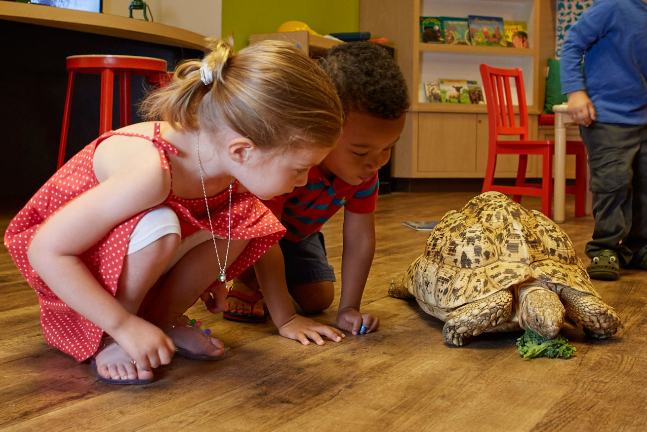 Field trips to the Academy of Natural Sciences may involve seeing a tortoise up close, like these two elementary school children.