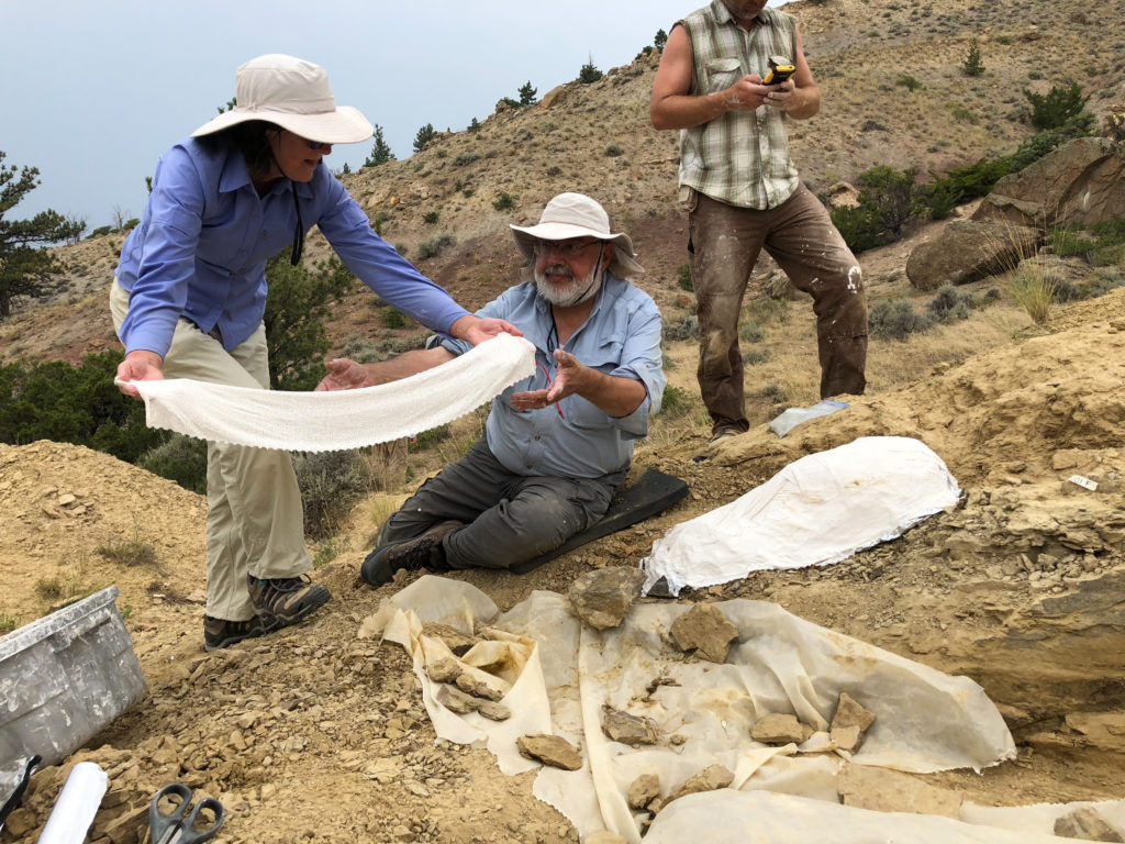 Karen Lattuca covers pieces of fossil with large white cloth as plastering process begins. Wayne assists.