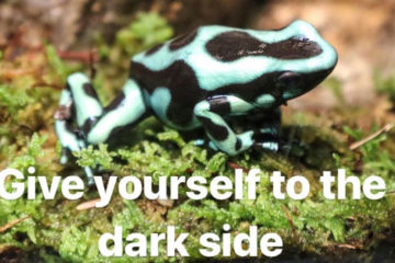 Poison dart frog with caption--give yourself to the dark side.