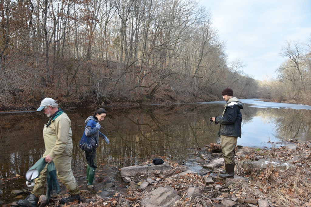 Researchers search for mussels on the bank of a stream during early winter