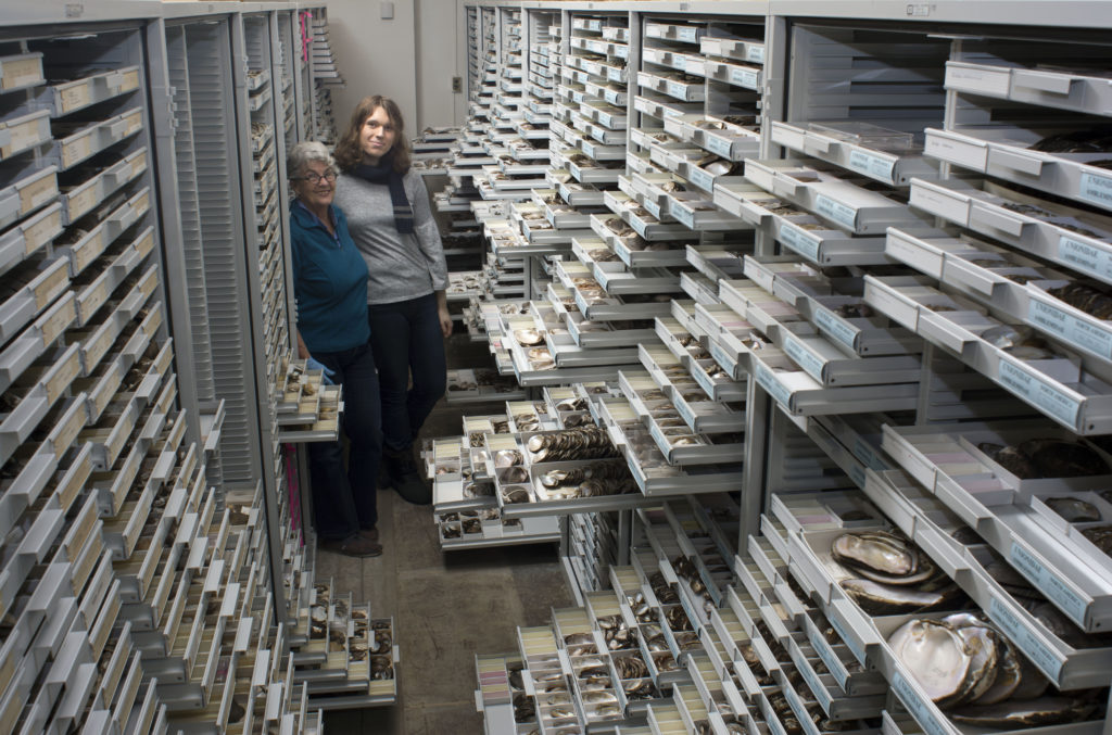 Two women stand among hundreds of open white drawers of collected shells