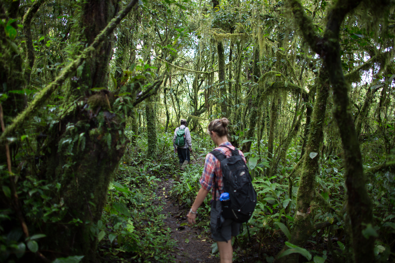 Two people walk on a path through dense green vegetation in the forests of Bioko.