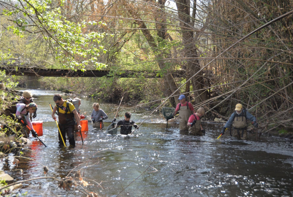 Scientists and others of all ages wade in a stream with nets and electroshocking gear
