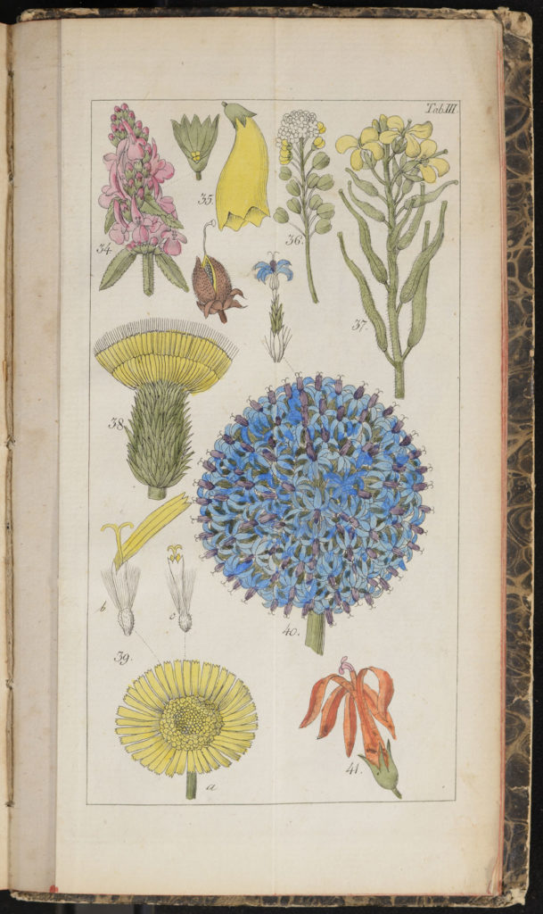 Illustration from Willdenow's Guide to Self-Study of Botany