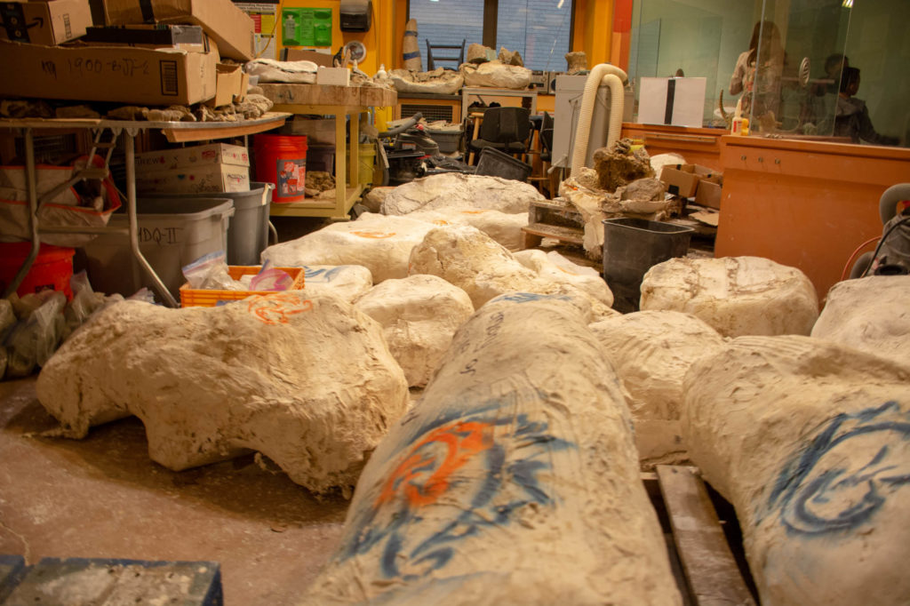 Fossils fill the inside of the Academy's Fossil Prep Lab