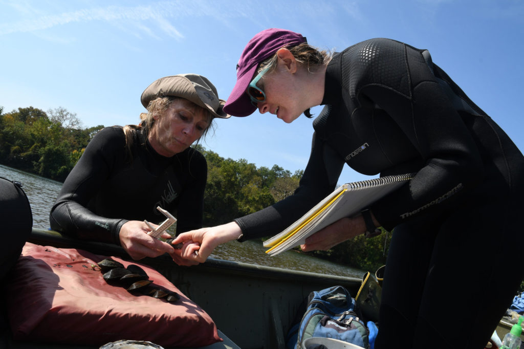 Two scientists examine a mussel collected from the water