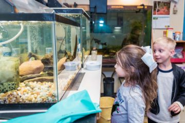 Girl looks into animal tank