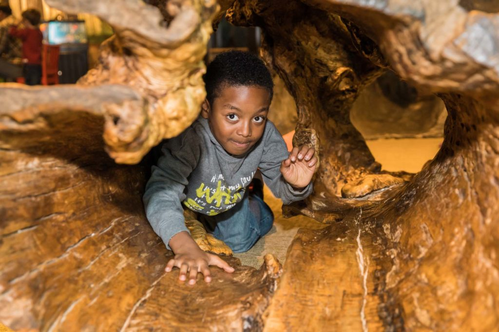 Boy crawls through hollow log in Outside In exhibit