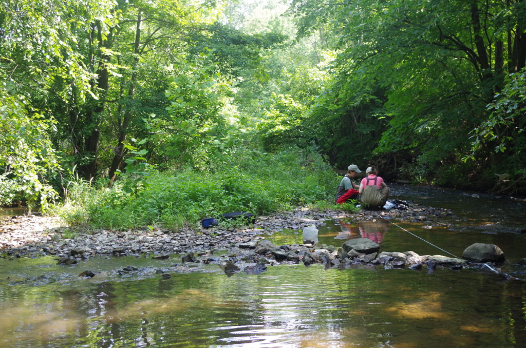 Two scientists working stream side