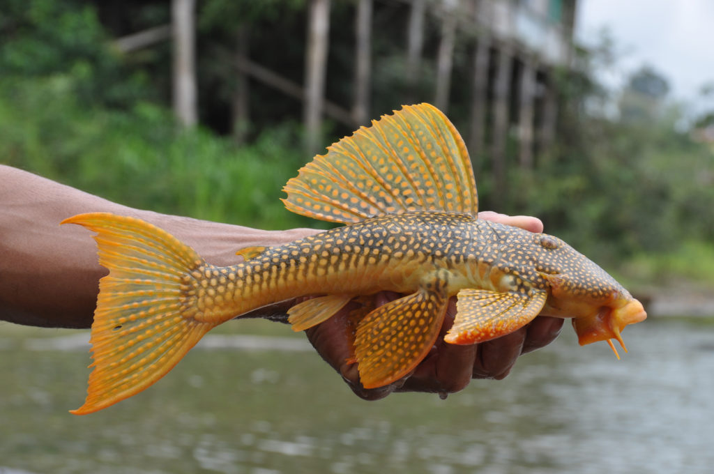 hand holding yellow fish