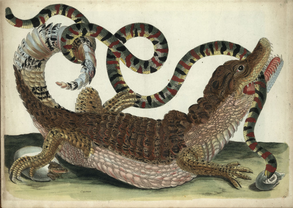 snake and croc